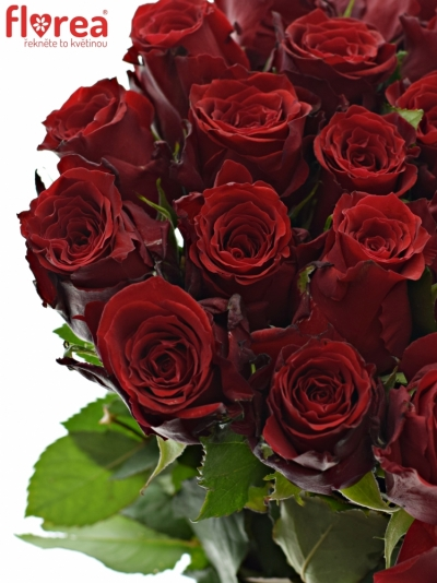 ROSA RED TORCH 80cm (L)