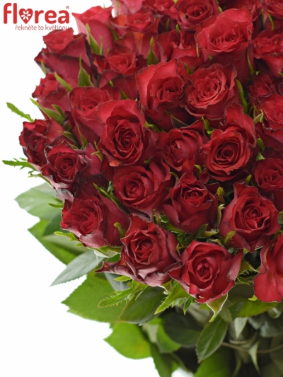 Červenofialová růže DARK LULU 40cm