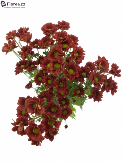 CHRYSANTHEMA T REDSTART 75g