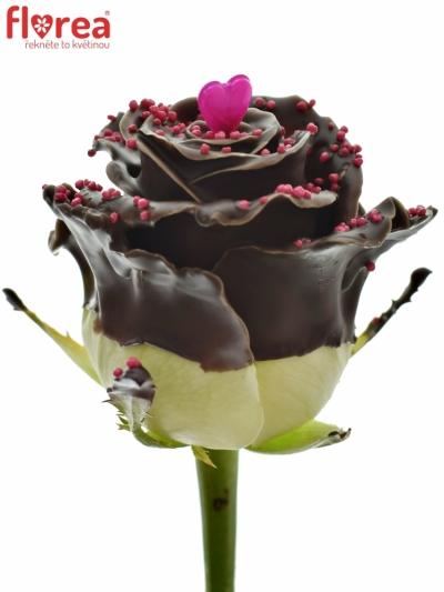 Čokoládová růže CHOCOLAT PEARL LOVE 70cm (L)