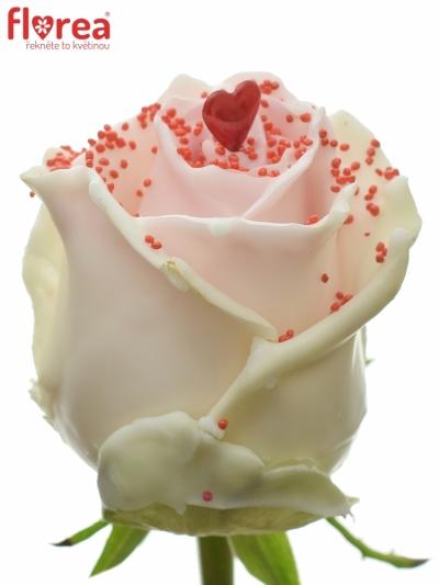 Čokoládová růže CHOCOLAT RED PEARL RED LOVE 70cm (L)