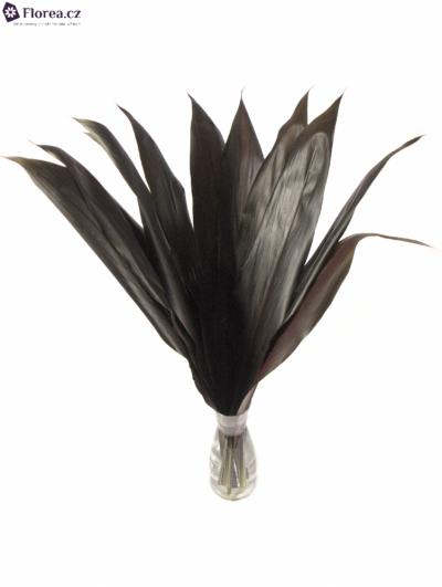 CORDYLINE BLACK TIE 60cm
