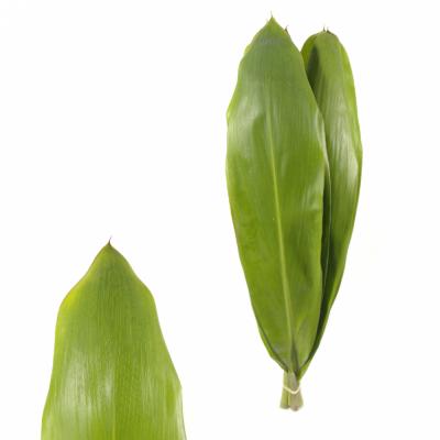 CORDYLINE GREEN TIE 80cm