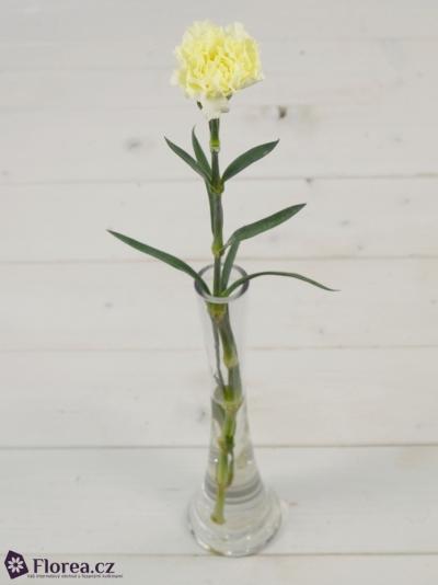 DIANTHUS ST YELLOW LIBERTY 55cm