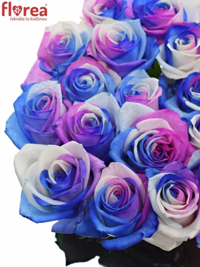 Duhová růže RAINBOW ALEKSANDRA 85cm (XL)