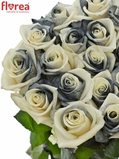 Duhová růže RAINBOW BLACKWHITE