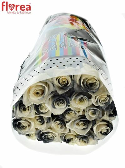 ROSA RAINBOW BLACKWHITE 65cm
