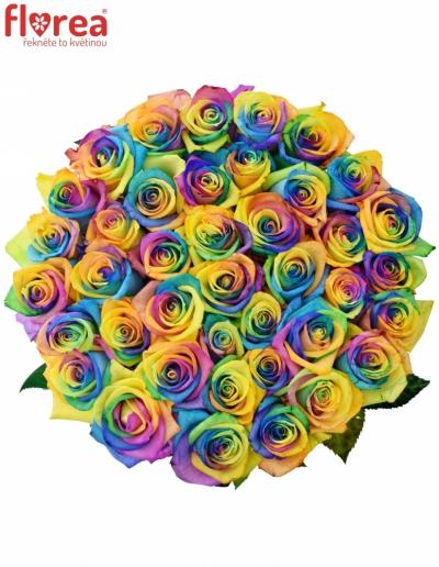 Duhová růže RAINBOW