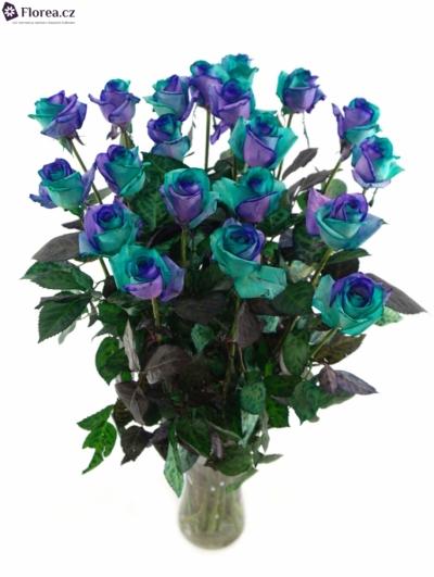 Duhová růže RAINBOW PACIFIC BLUE 80cm (XL)