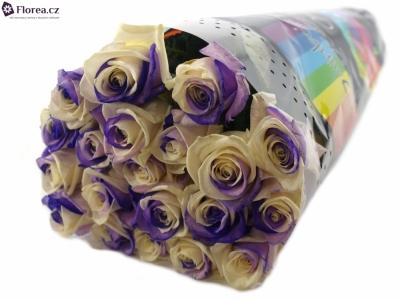 ROSA RAINBOW PURPLEWHITE 65cm (L)
