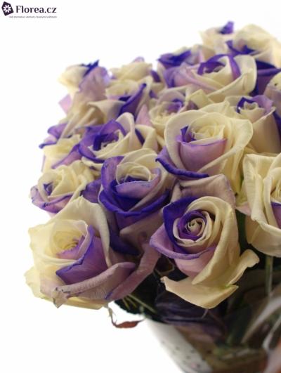 Duhová růže RAINBOW PURPLEWHITE