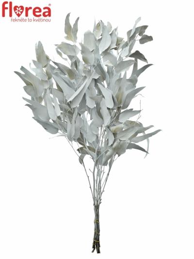 Eukalyptus  GLOBULUS WHITE 80cm