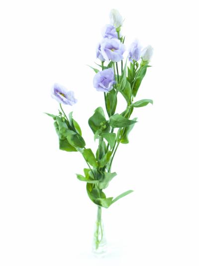 Jícnovka E MIX 65cm