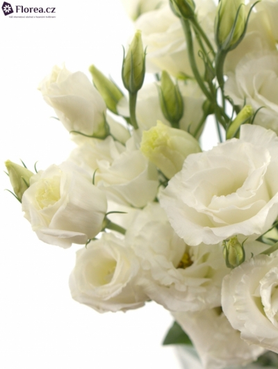 EUSTOMA EXCALIBER PURE WHITE