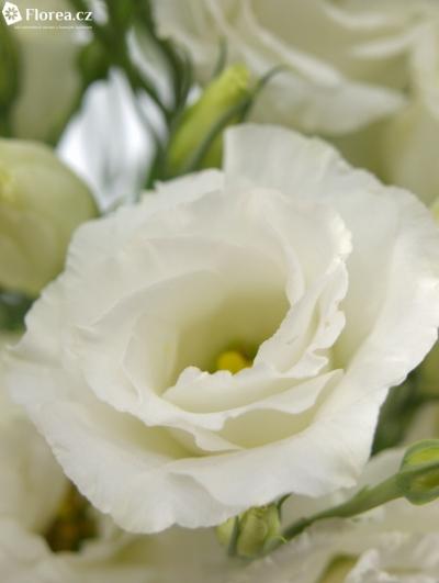 EUSTOMA EXCALIBER PURE WHITE 70cm/5+