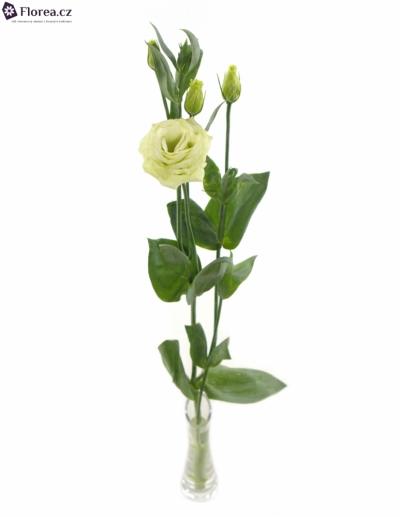 EUSTOMA G CESSNA GREEN 75cm/5+