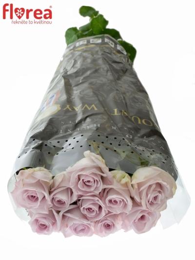 ROSA BOUNTY WAY 60cm (XL)