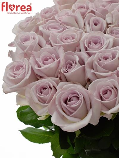 Fialová růže BOUNTY WAY 80cm (XL)