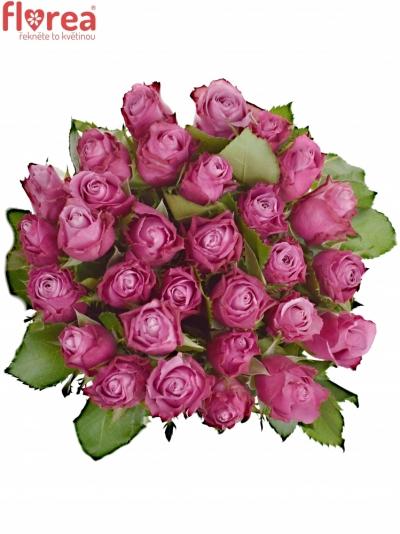 Fialová růže DEEP WATER 80cm