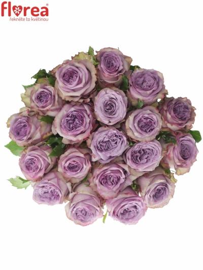 Fialová růže DOLCETTO! 70cm