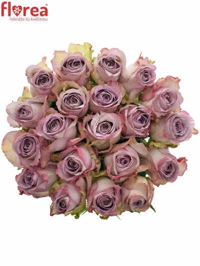 Fialová růže MEMORY LANE! 40cm (L)