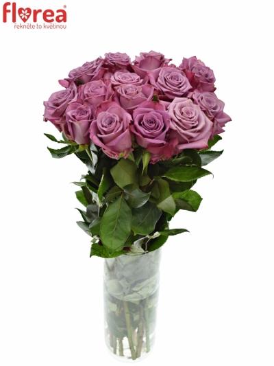 Fialová růže MOODY BLUES 90cm (XXL)