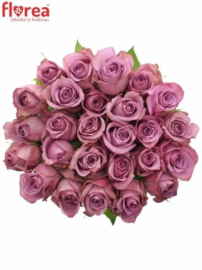 Fialová růže NEW ORLEANS