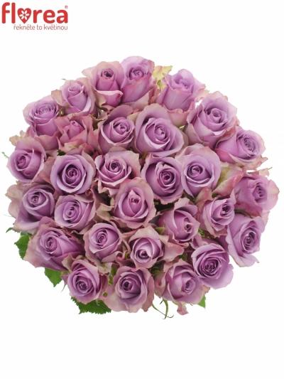 Fialová růže NIGHTINGALE! 70cm