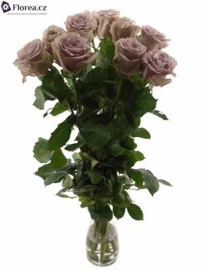 Fialová růže SAFI+