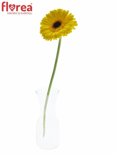Gerbera GR CANLELIGHT 10cm