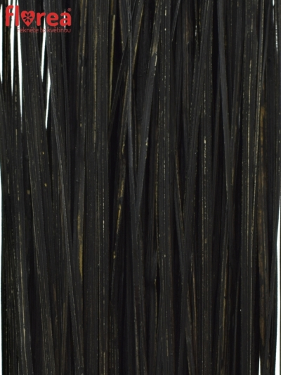 GRASS BEARGRASS 60cm BLACK
