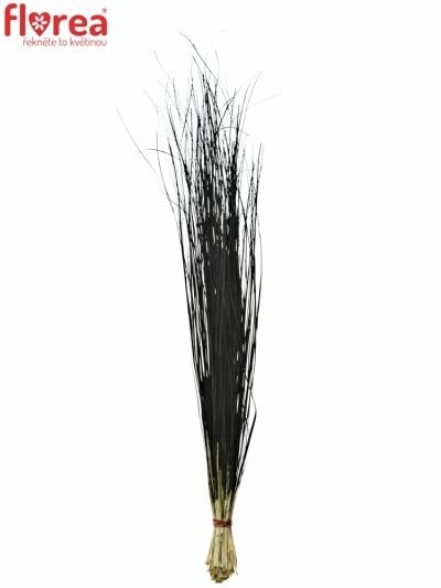 GRASS BEARGRASS 60cm BLACK