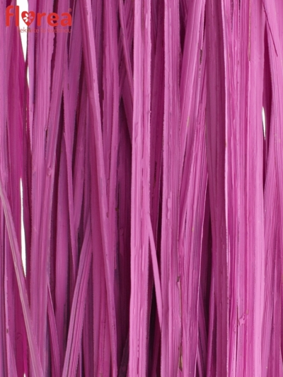 GRASS BEARGRASS 60cm CERISE
