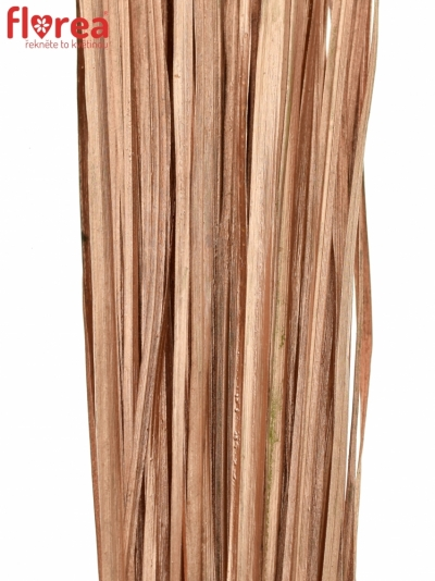 GRASS BEARGRASS 60cm COPPER