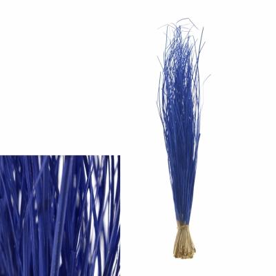 GRASS BEARGRASS BLUE