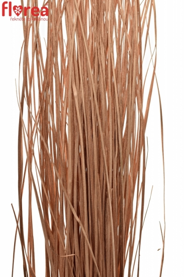 GRASS BEARGRASS COPPER 60cm