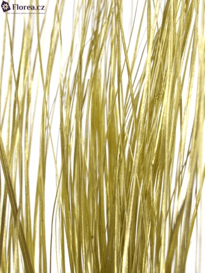 GRASS BEARGRASS 60cm GOLD