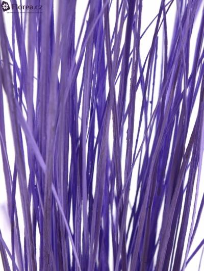GRASS BEARGRASS 60cm MILKA