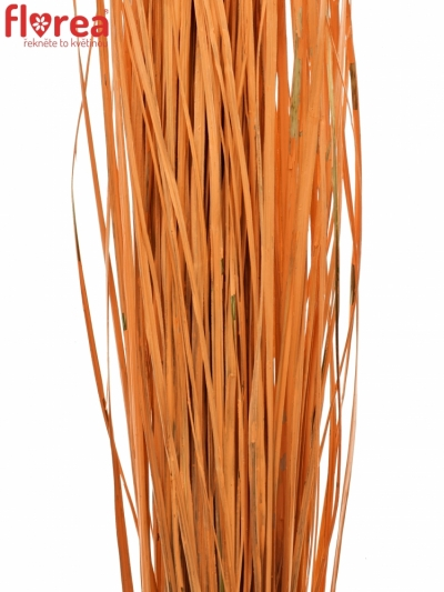 GRASS BEARGRASS 60cm ORANGE