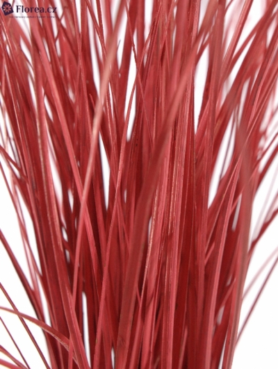 GRASS BEARGRASS RED