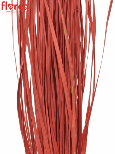 GRASS BEARGRASS 60cm RED