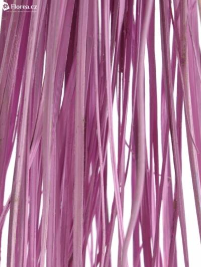 GRASS BEARGRASS ROSE