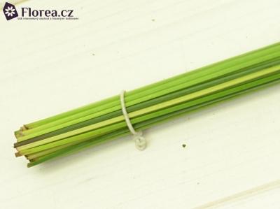 GRASS STEELGRASS 80cm
