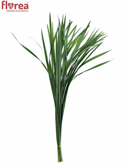 GRASS T-GRASS GREEN
