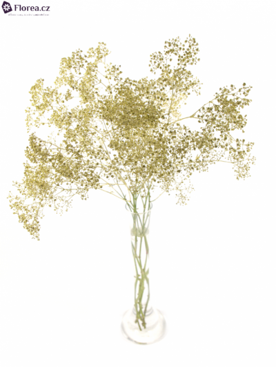 GYPSOPHILA GOLD GLITTER 80cm/23g