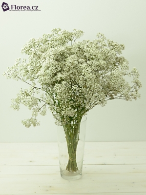 GYPSOPHILA PA NEW LOVE 20g