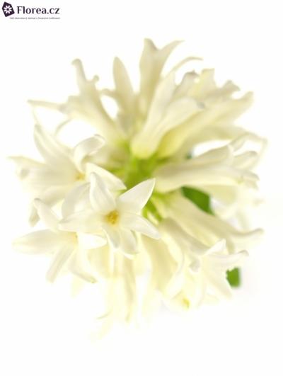 HYACINTHUS WHITE PEARL 30g