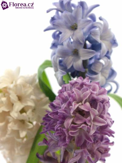 Hyacint MIX 30g