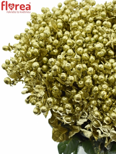 Hypericum BARVENÉ GOLD 70CM