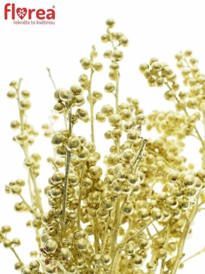 Ilex VERTICILLATA GOLD 40cm